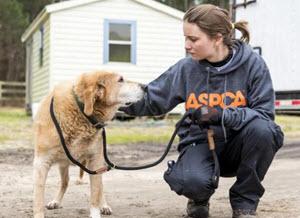 Animal Cruelty Investigator