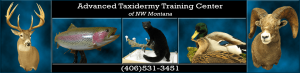 Advanced Taxidermy Training Center of NW Montana logo