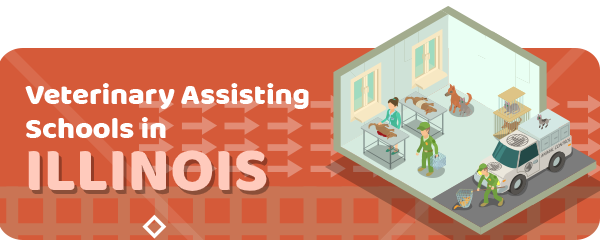 How to Become a Veterinary Assistant in Illinois