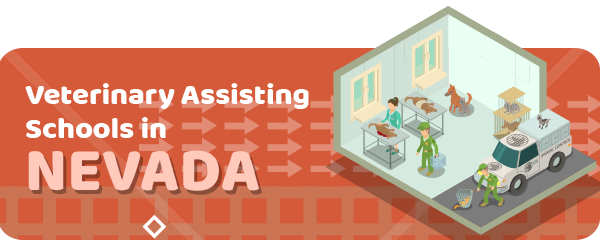 How to Become a Veterinary Assistant in Nevada