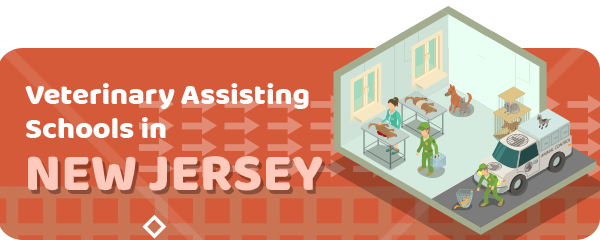 How to Become a Veterinary Assistant in New Jersey
