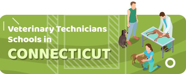 How to Become a Veterinary Technician in Connecticut